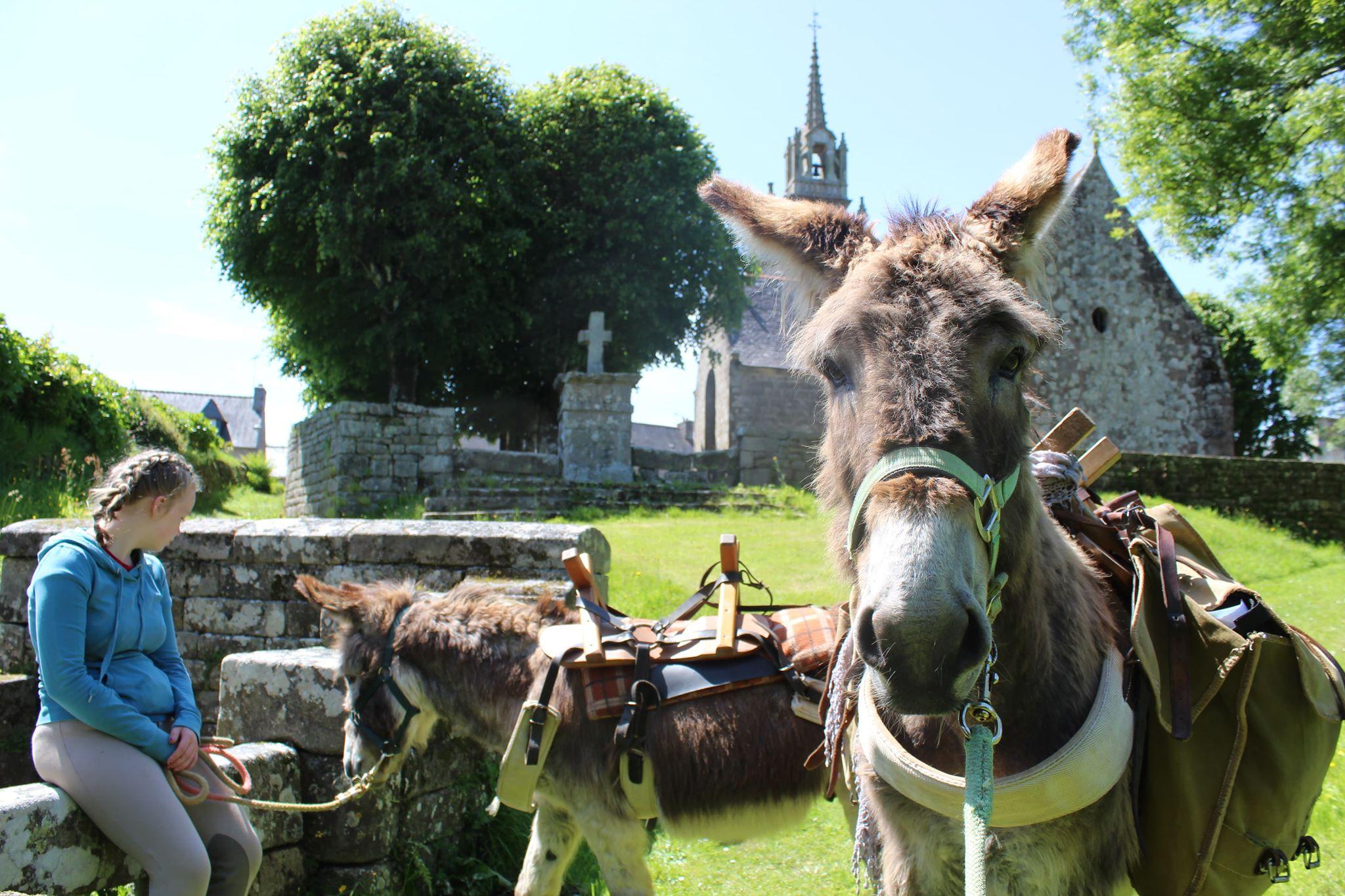 Randonnée avec les ânes en terre bretonne