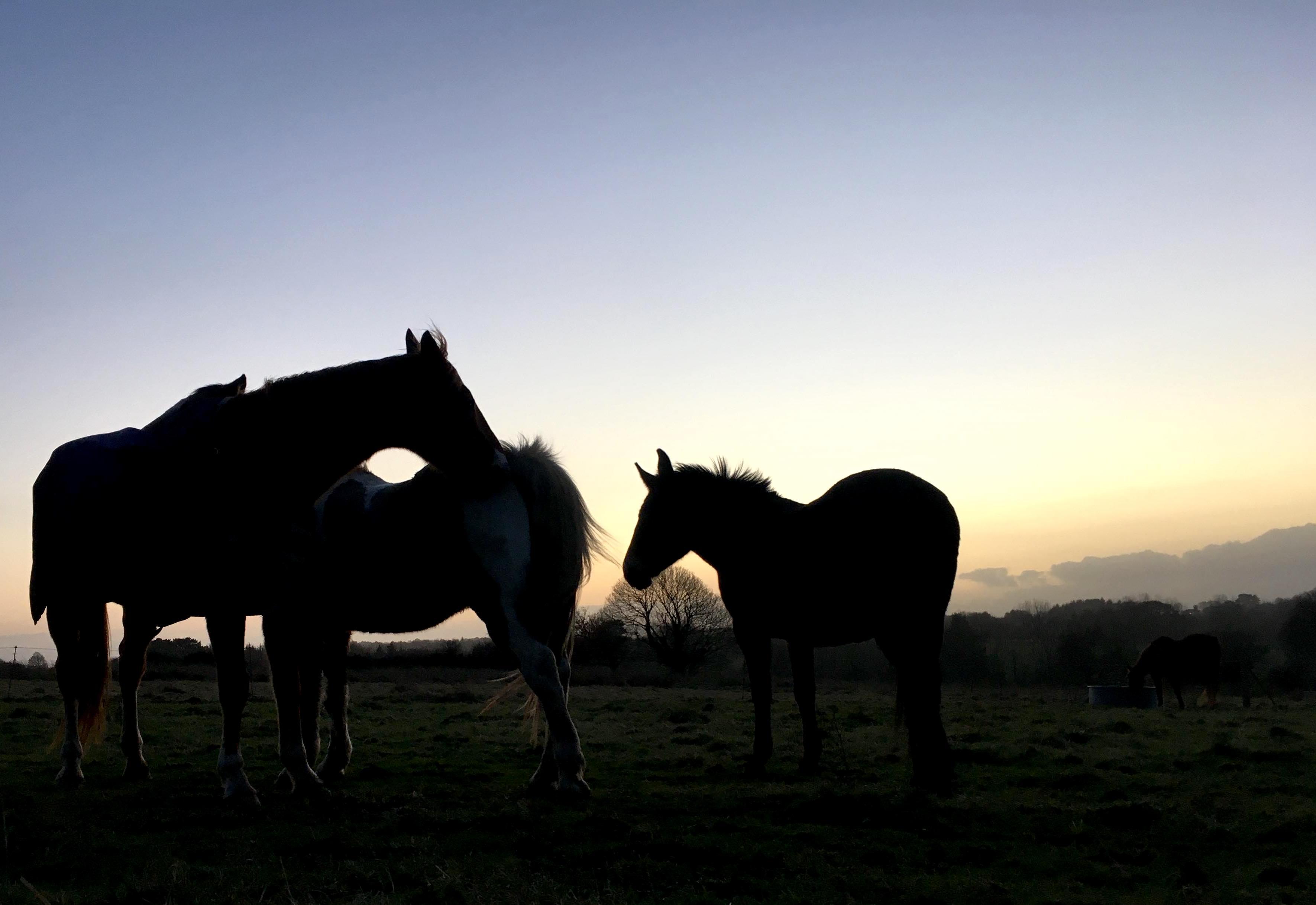 Rencontre avec un troupeau de chevaux