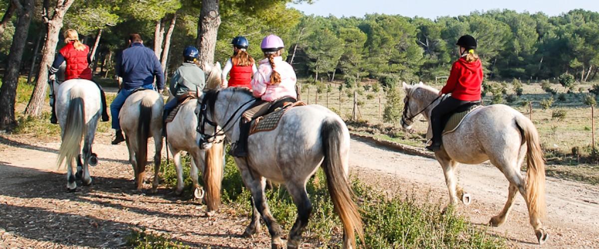 Randonnée à cheval au coeur des Alpilles en Provence