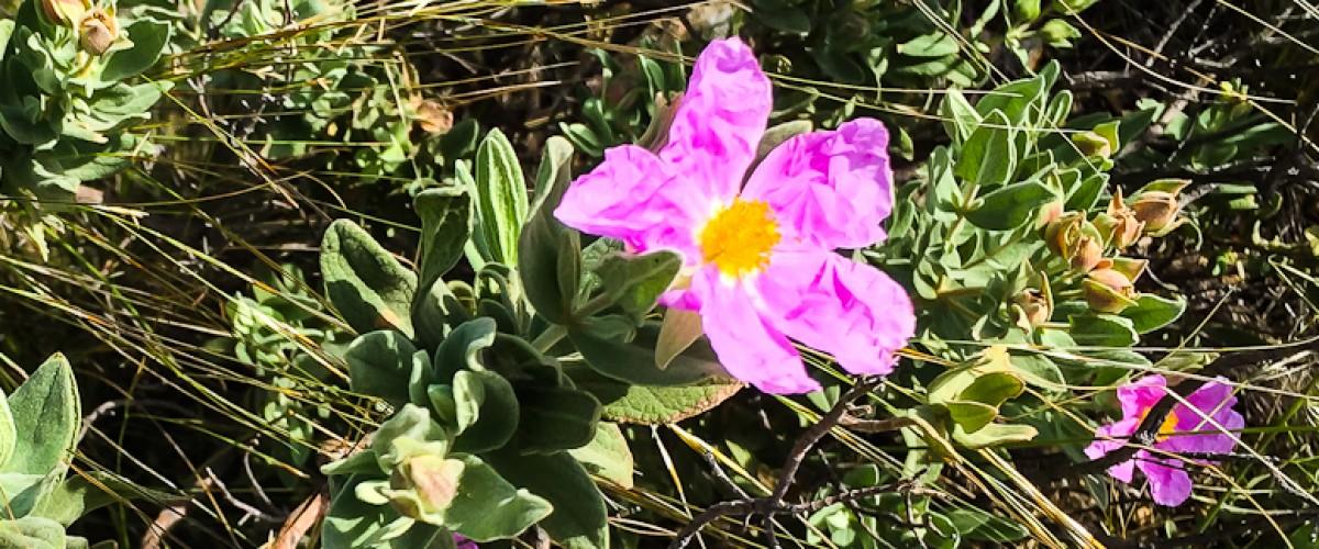 Découverte des plantes sauvages de Provence