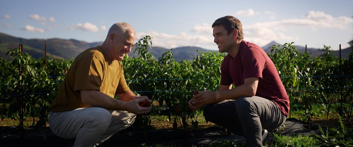 Les secrets du piment d'Espelette AOP avec un producteur 100% basque