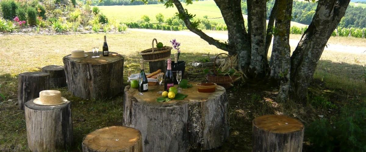 Visite et Pique-Nique dans les vignes de la Côte des Bar en Champagne