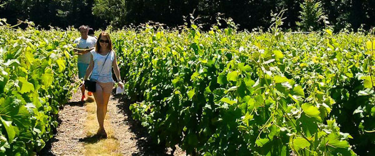 De la vigne au verre de Vouvray... avec une passionnée