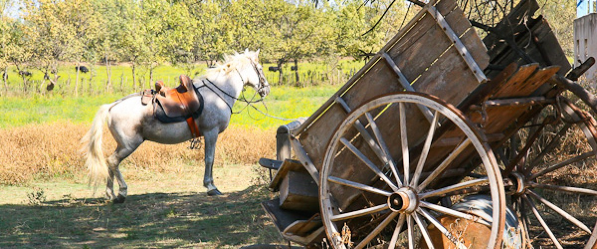 Visite guidée naturaliste à cheval