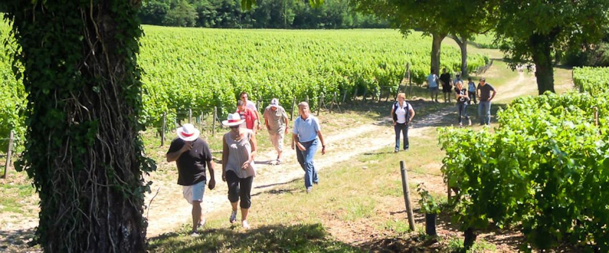 Initiation à la dégustation des vins du Val de Loire, près d'Amboise
