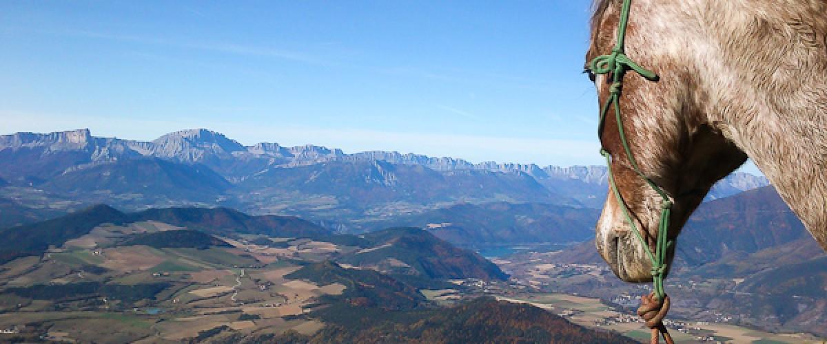 Randonnée à cheval dans les montagnes du Trièves