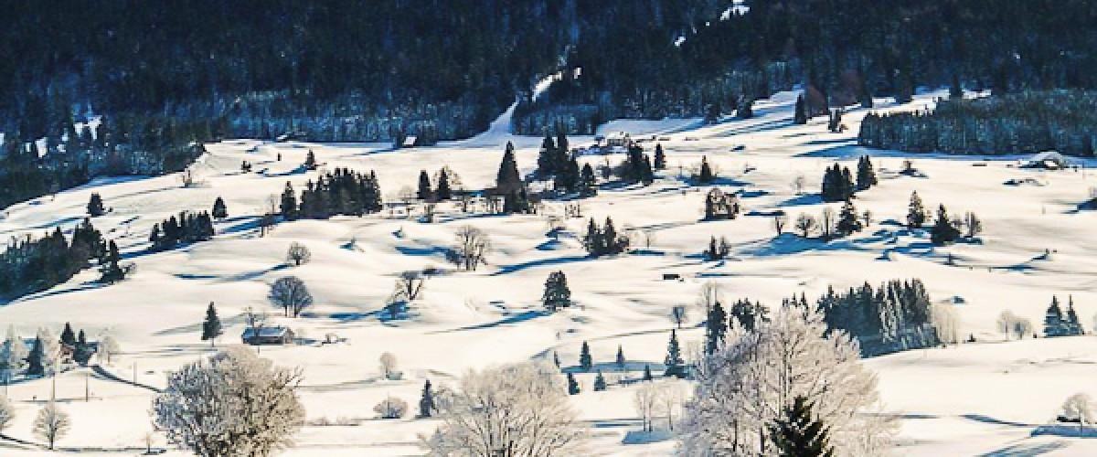 Découverte du ski-joëring dans le Haut-Jura