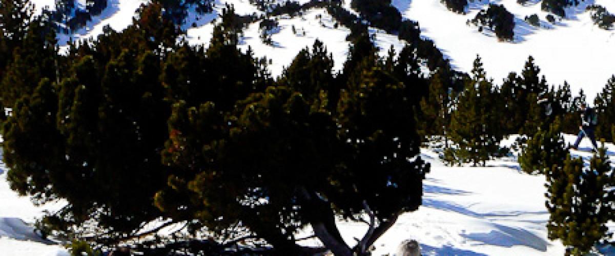 Découverte du milieu naturel des Pyrénées Orientales en raquettes
