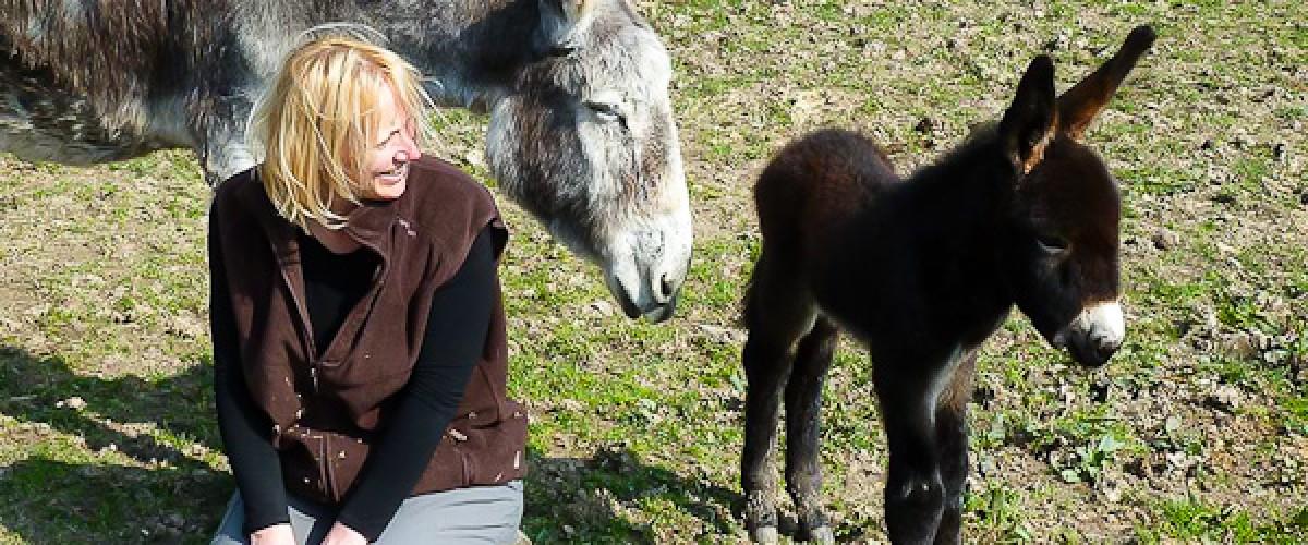 Visite d'une ferme aux ânes et jeux de plein air pour les enfants