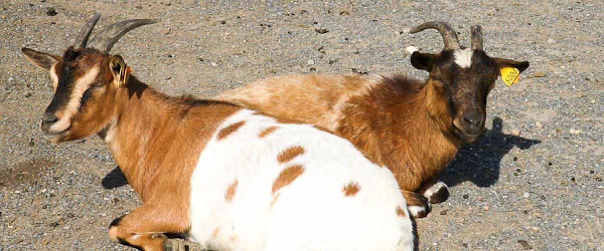Visite d'une ferme pédagogique : découverte des animaux