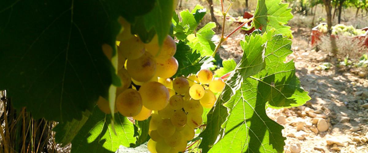 Visite d'un domaine viticole familial en Provence et dégustation