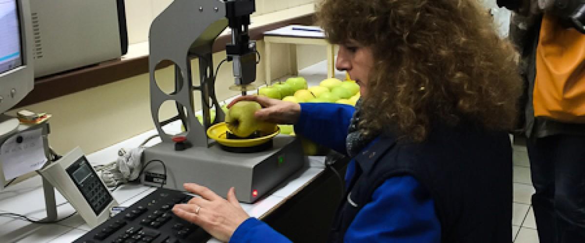 Visite d'une coopérative de pommes du Limousin AOP