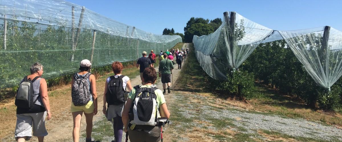 Pommes du Limousin AOP : Rando visites 12km