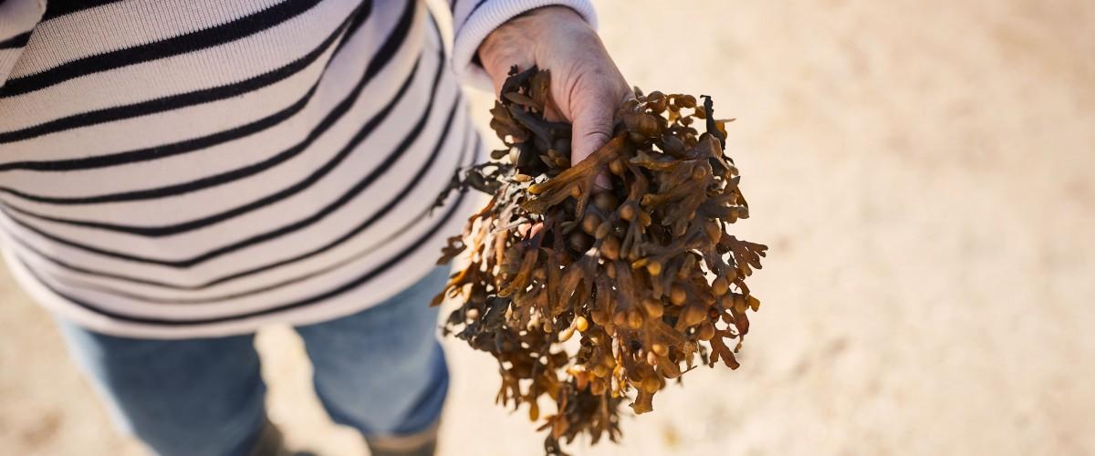 Atelier de cuisine des algues avec une agrocultrice bretonne