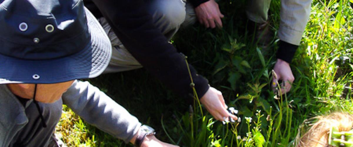 Plantes sauvages : cueillette & cuisine avec une Ethnobotaniste !