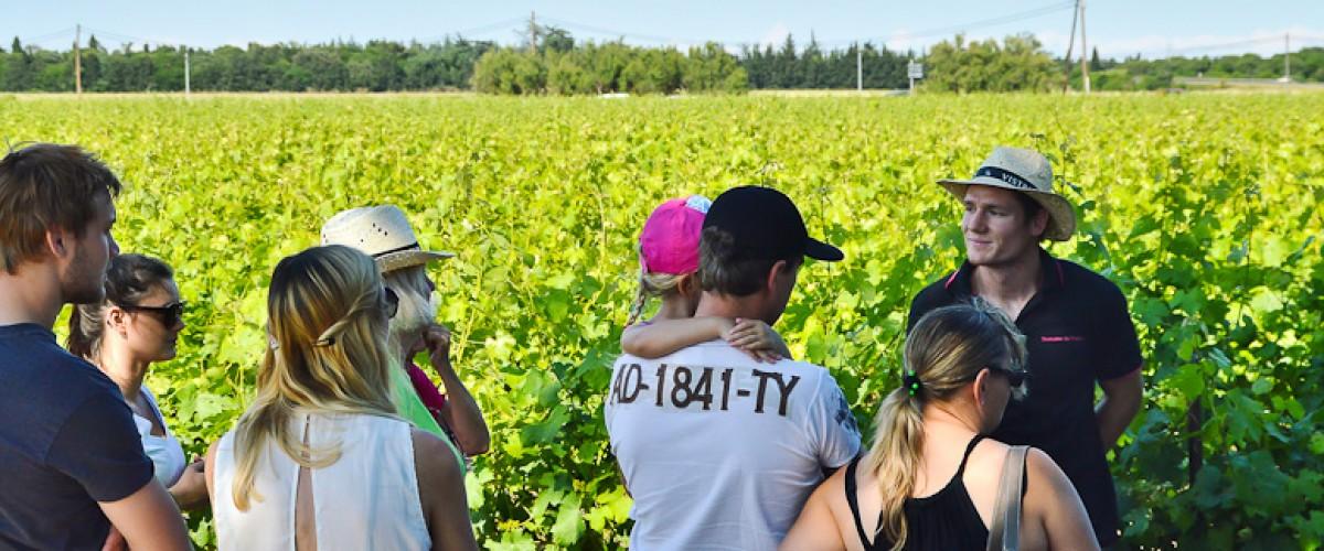 Petite Camargue : visite d'un domaine viticole familial et dégustation