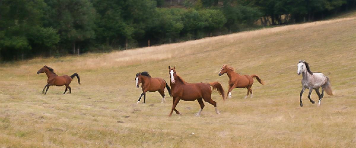 L'équitation autrement : séance de relaxation avec un cheval