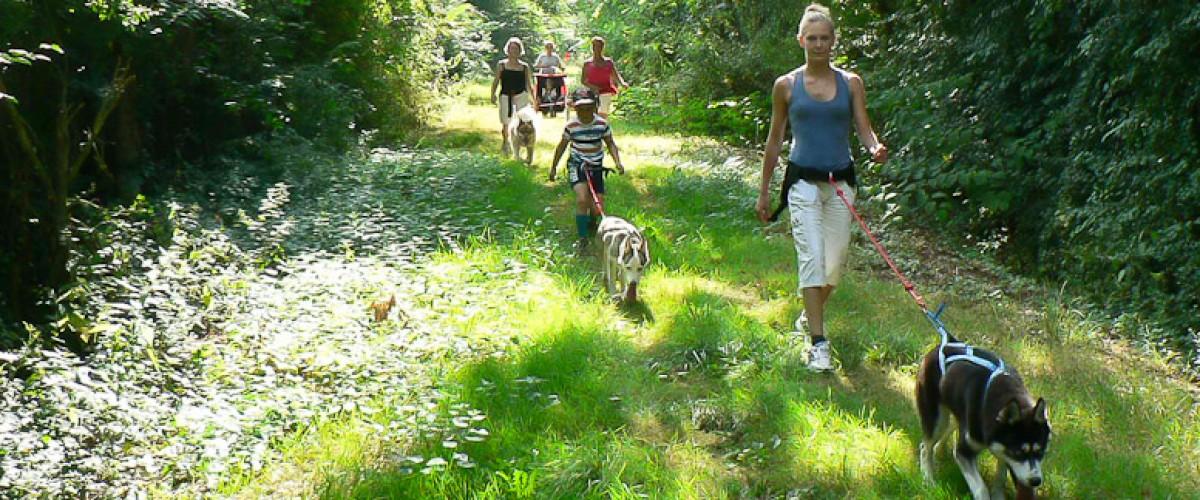Cani-randonnée avec des chiens de traineau à coté de Saumur