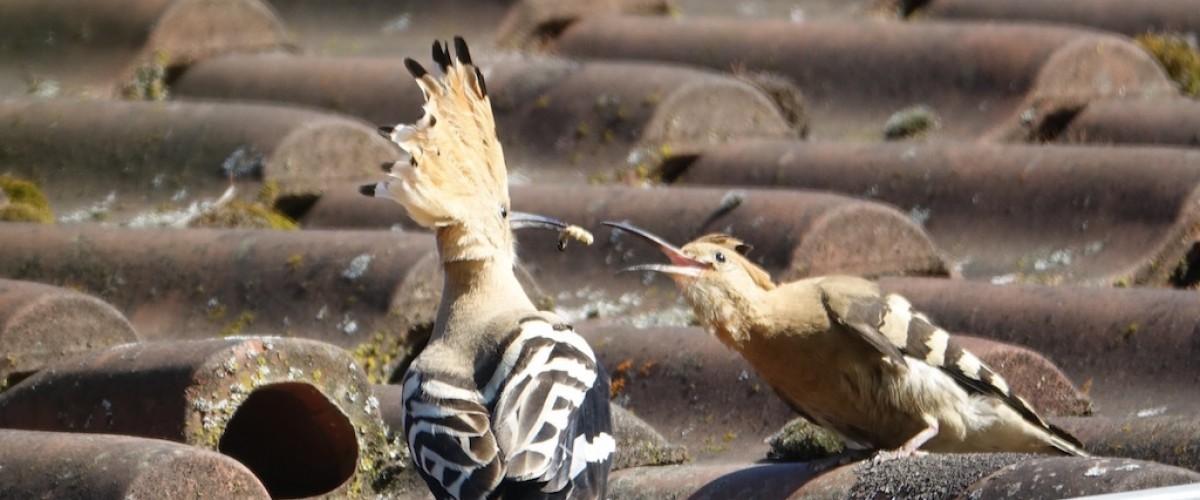 Sortie ornithologique : au plus près des oiseaux en Haute Marne