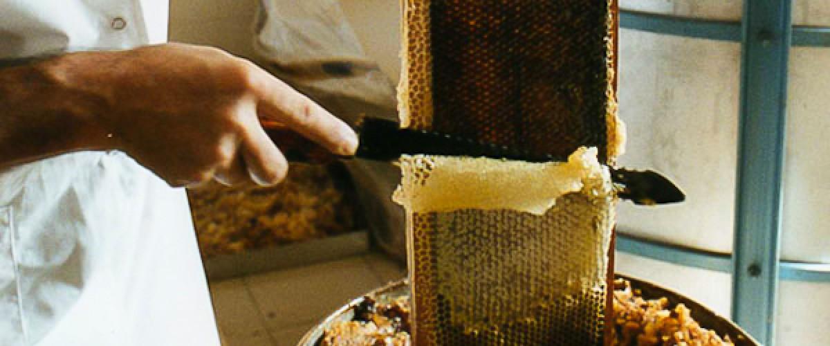 Visite ludique d'une miellerie dans la Drôme provençale