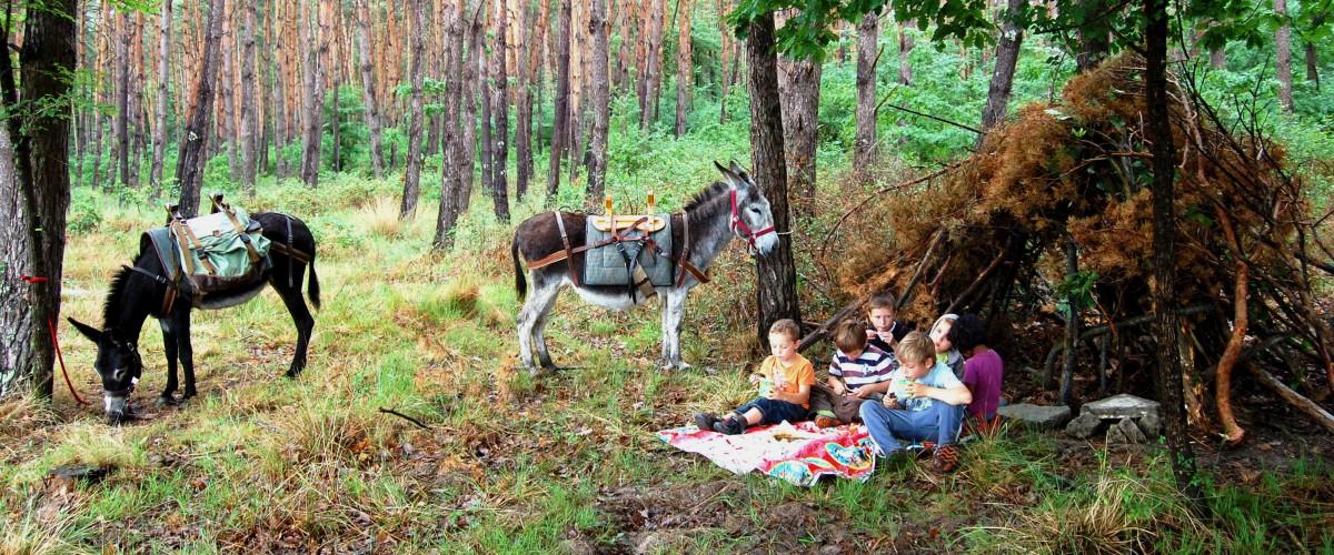 Randonnée avec un âne au cœur de la forêt en Sologne