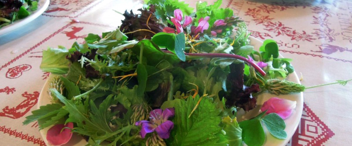 Journée cueillette de plantes, cours de cuisine végétale et repas