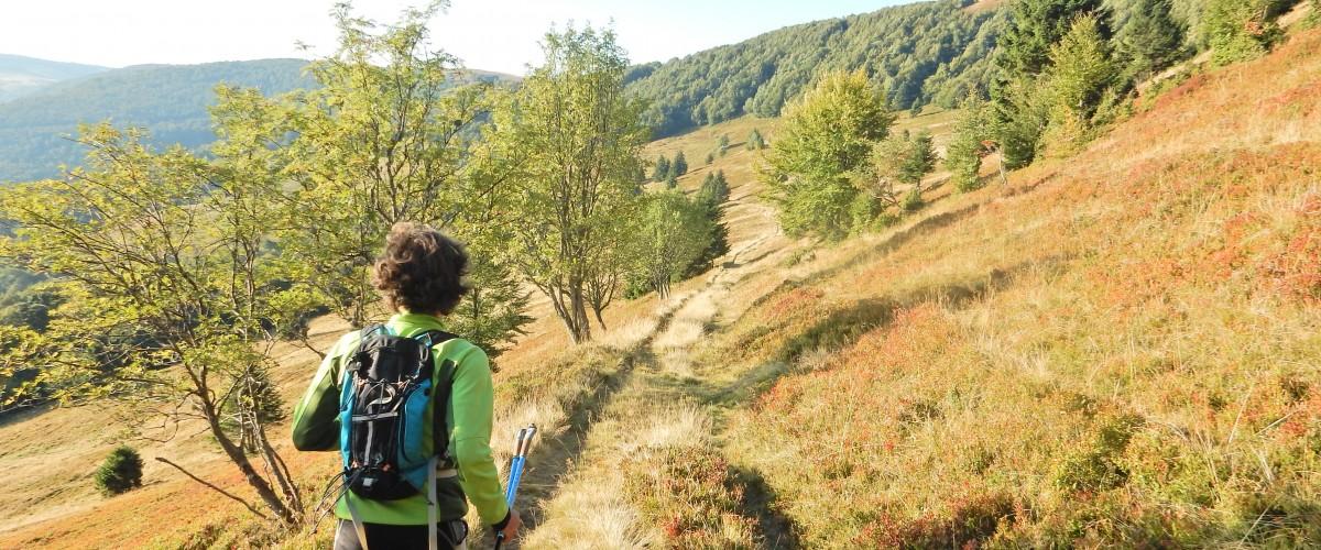Marche nordique dans les Vosges