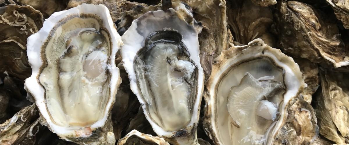 Visite et dégustation d'huîtres chez un ostréiculteur