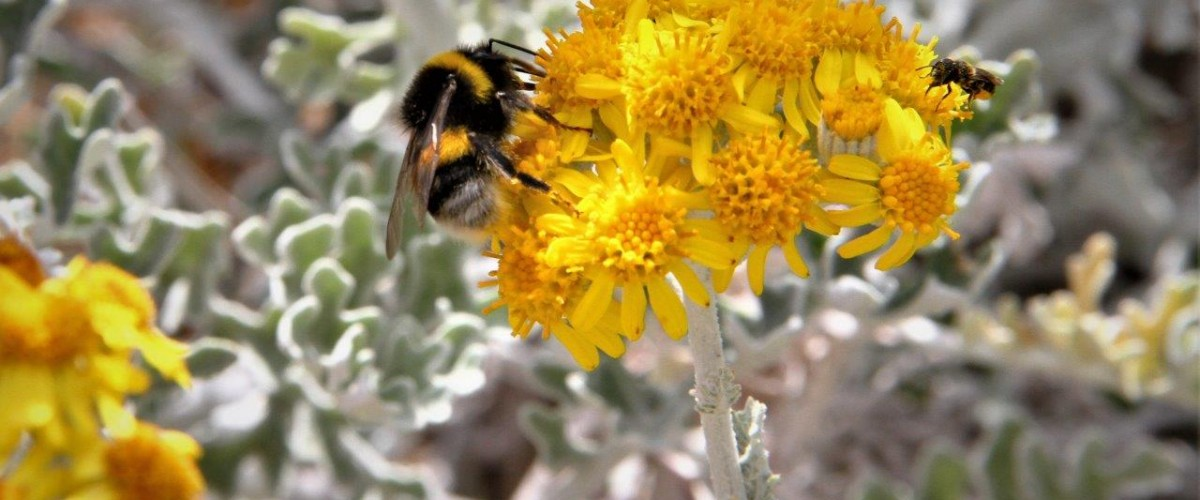 Balade florale commentée  au Frioul