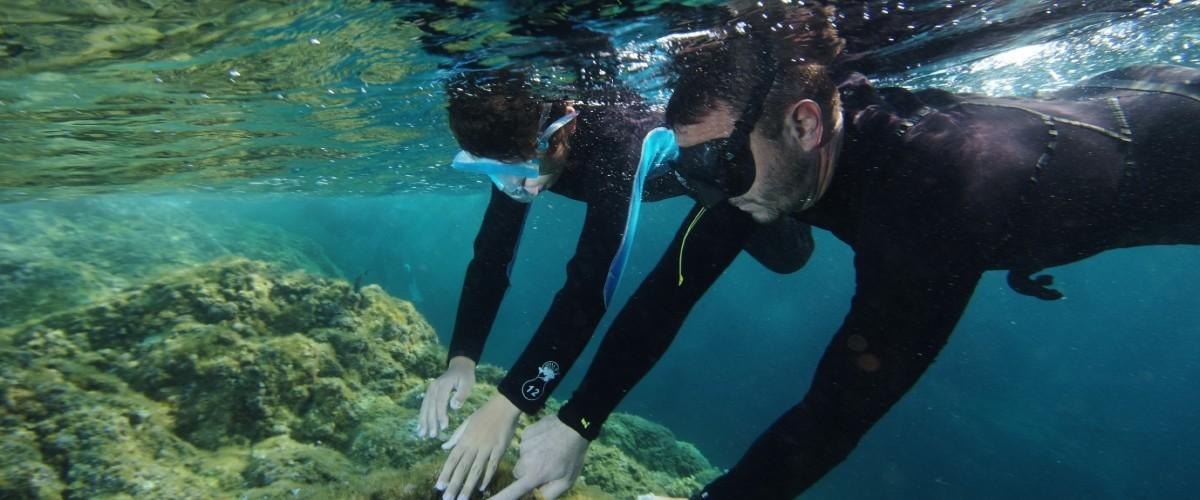 Snorkeling dans les calanques de l'Esterel