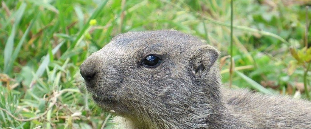 Journée marmottes en famille
