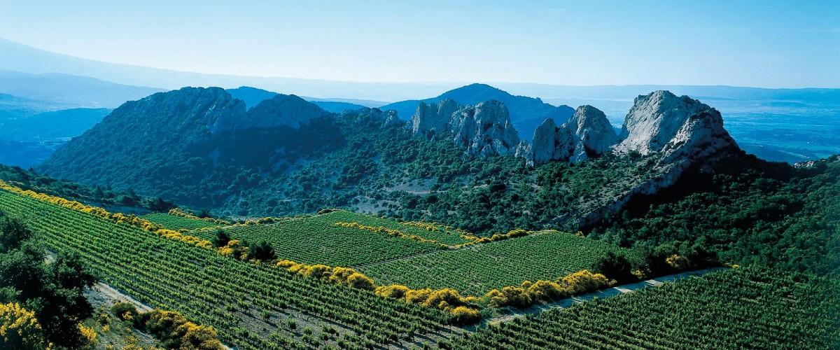 Œnotourisme :  découverte des vins de la Vallée du Rhône