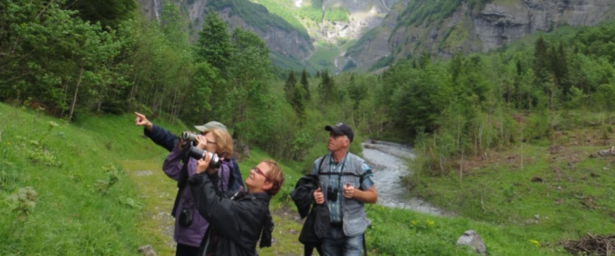 Randonnée accompagnée et observation de la Faune au Grand-Bornand