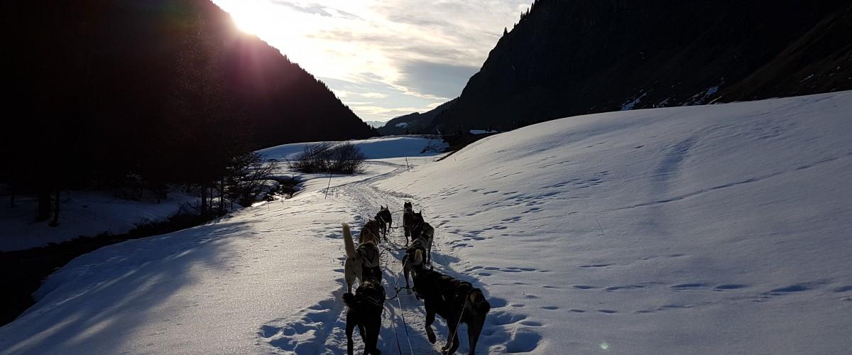 Balade en chiens de traîneaux près de Méribel