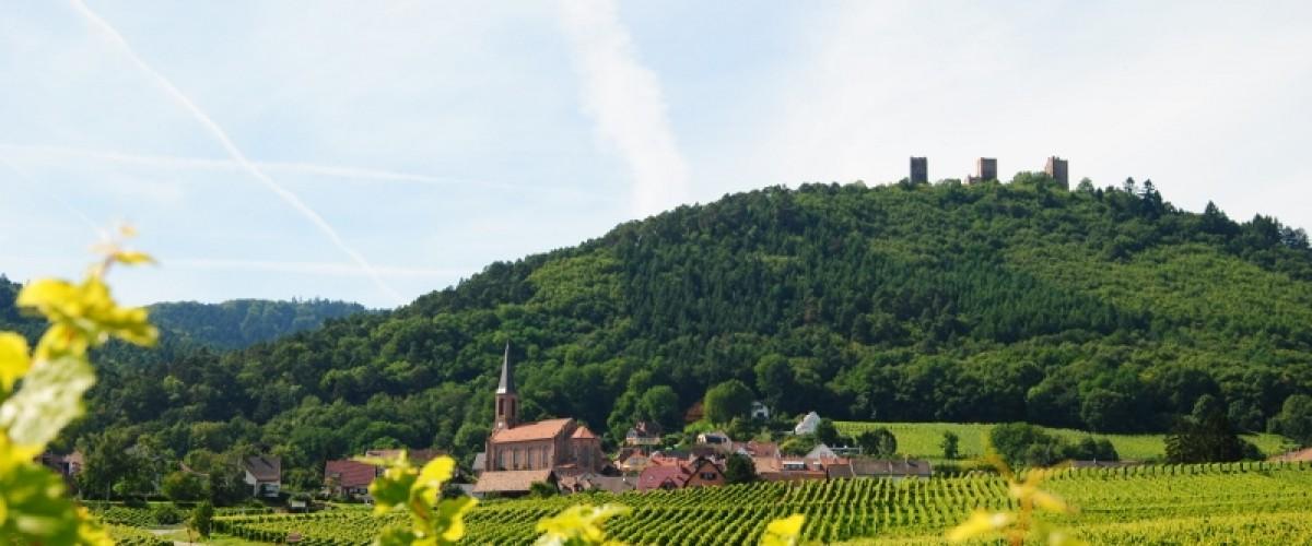 Dégustation Vins d'Alsace proche de Colmar
