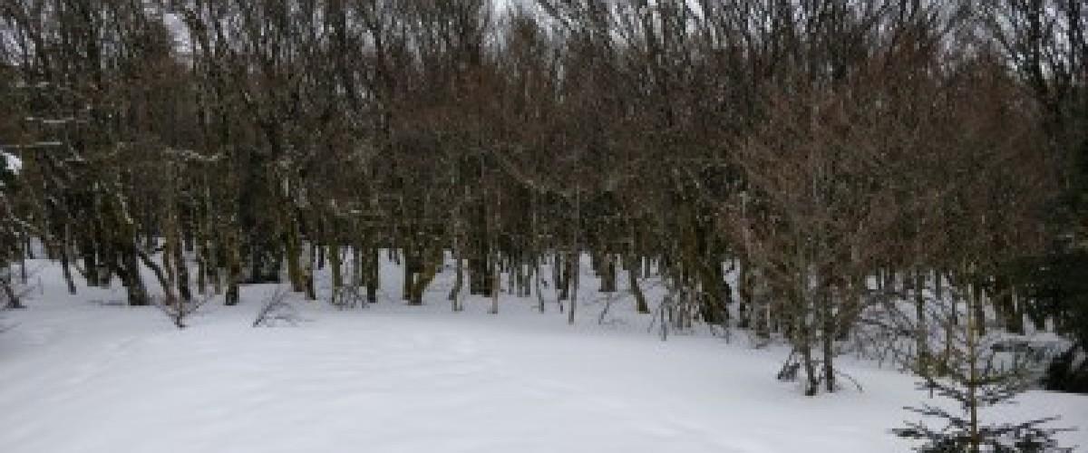 Initiation raquettes à neige pour les plus petits au Tanet