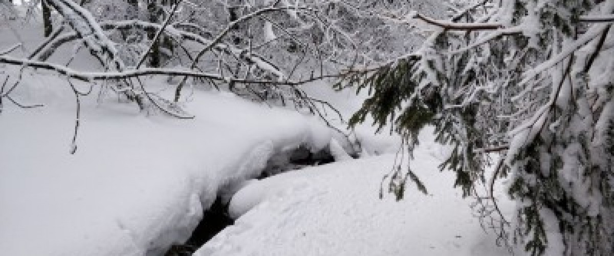 Initiation raquettes à neige pour les enfants au Hohneck