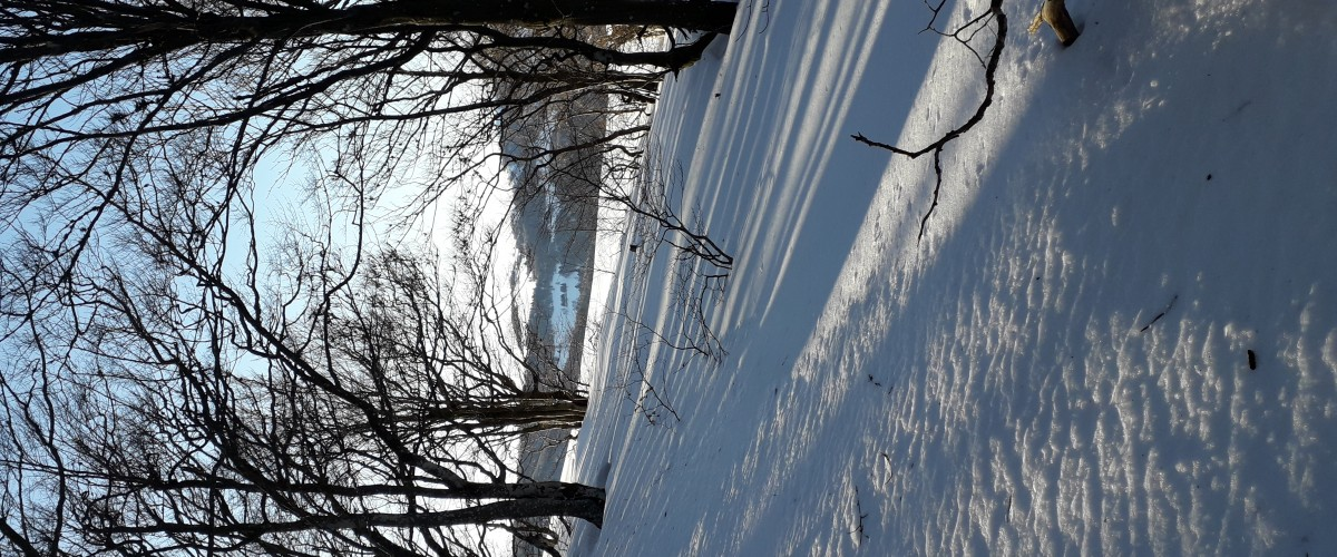 Randonnée raquettes proche de Colmar