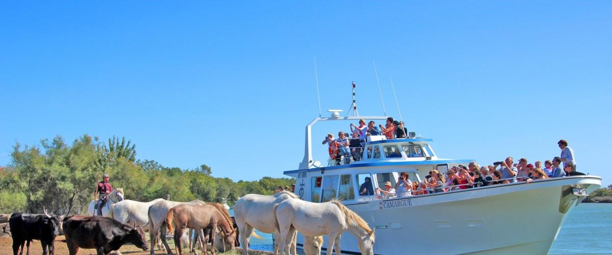 Balade en bateau sur le petit Rhône en Camargue