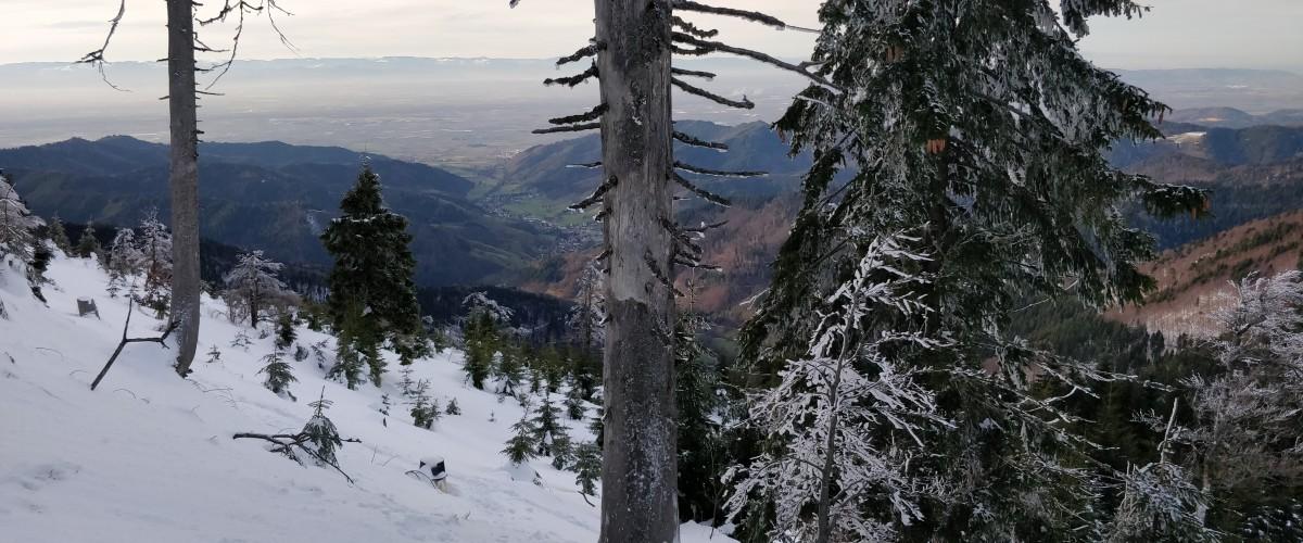 Sortie Nature en Raquettes à neige à la Forêt Noire