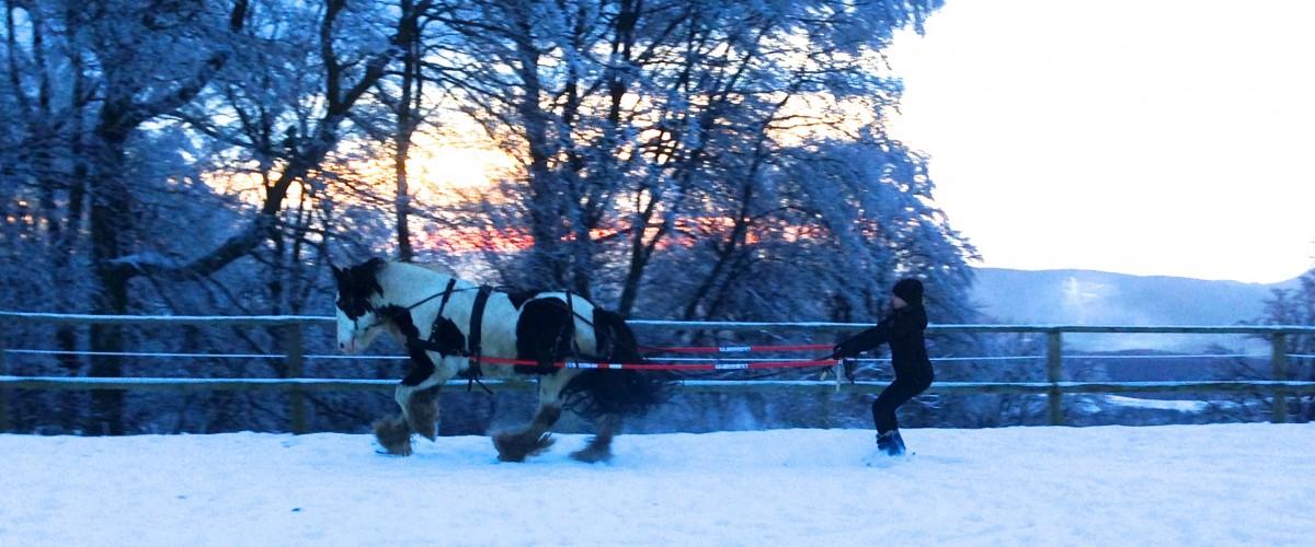 Initiation ski-joering en Alsace