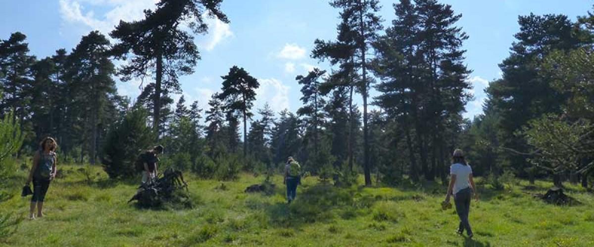 Se ressourcer : Bain de forêt en Alsace