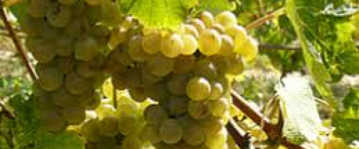 Dégustation des vins de cépages oubliés à Lyon