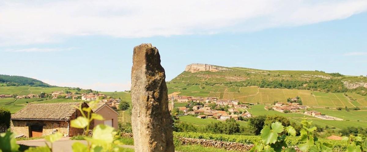Excursion œnologique à la découverte du chardonnay