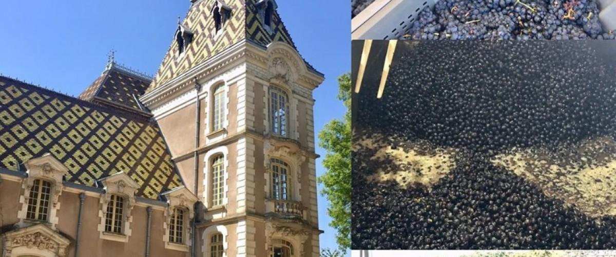 Découverte du vignoble d'Aloxe-Corton et de ses grands crus