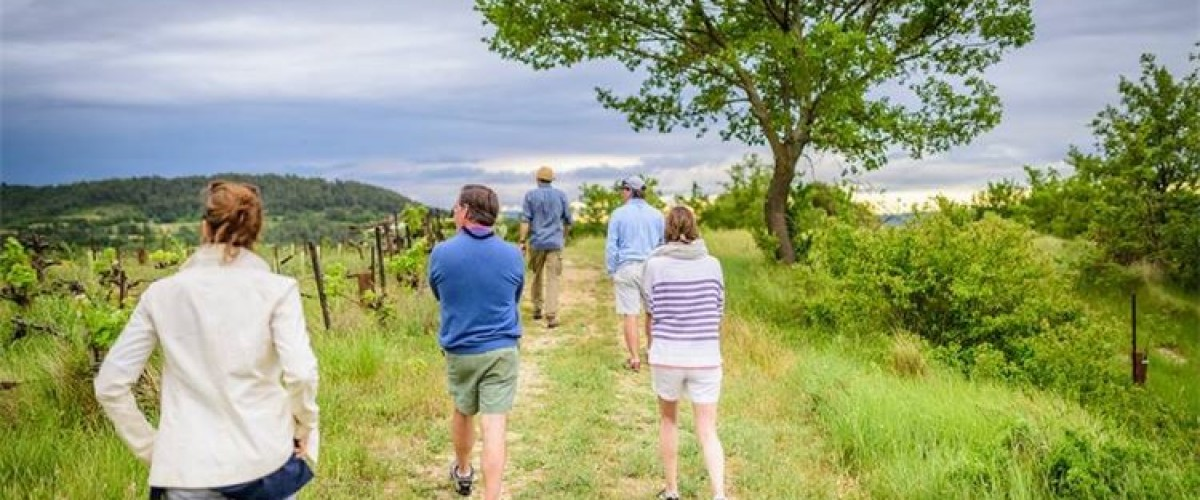Foraging and hiking hills in Lubéron