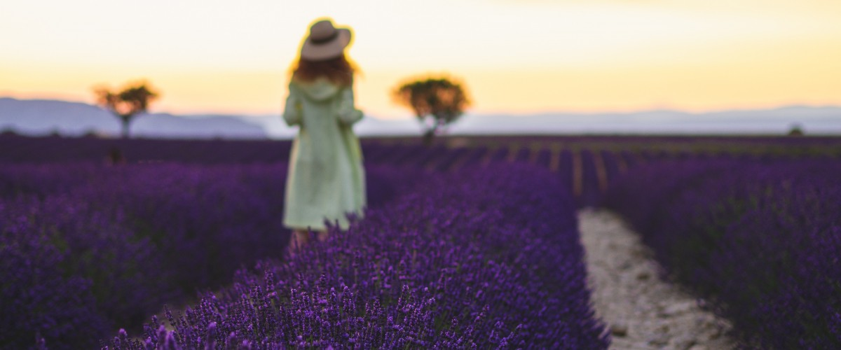 Excursion dans les champs de lavande du Luberon