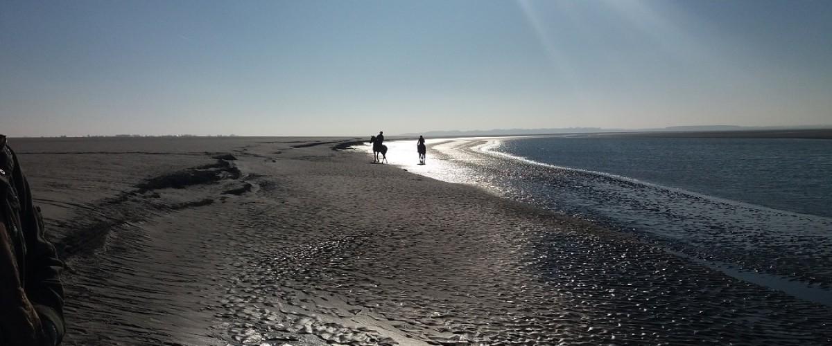La découverte des phoques en baie de Somme