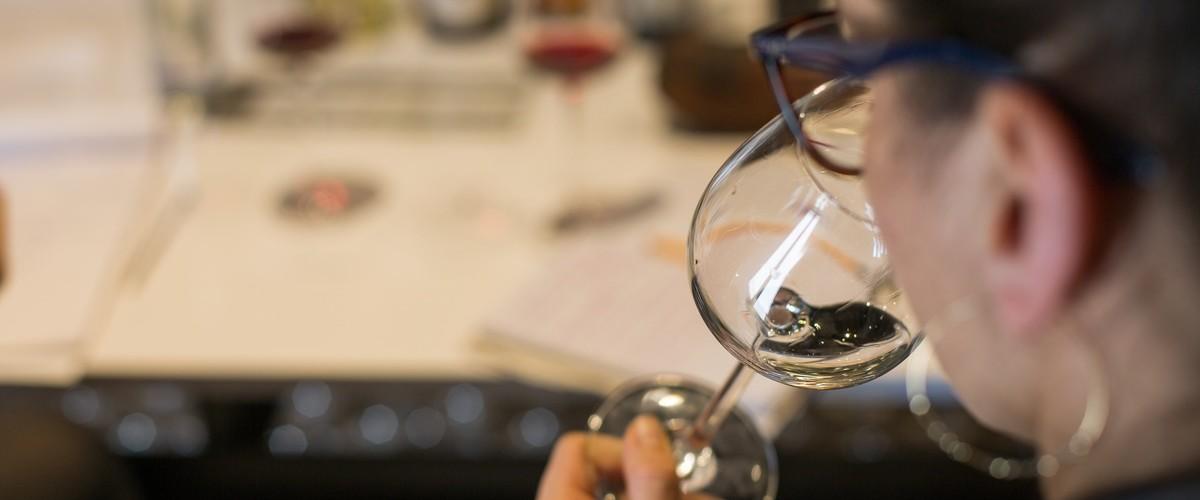 Cours d'œnologie dans un domaine viticole provençal