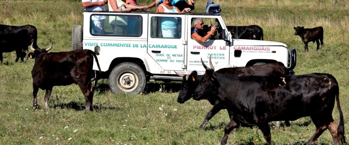 Safari découverte de la Camargue en 4x4